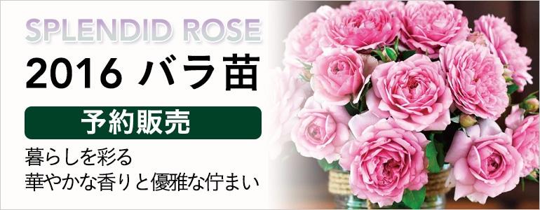 2016 バラ苗予約販売