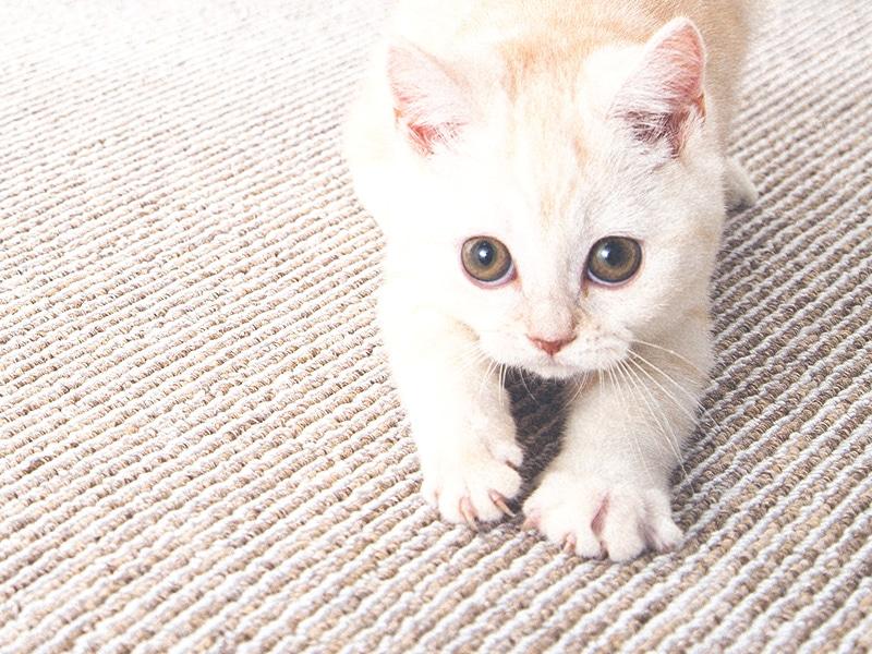 やんちゃな猫からお家を守る