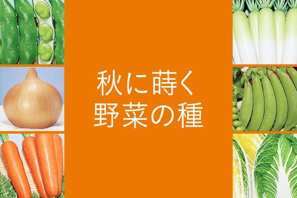 秋に蒔く野菜の種