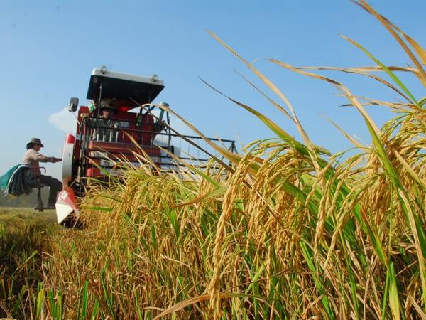滋養に富んだ原料米を使用しています。