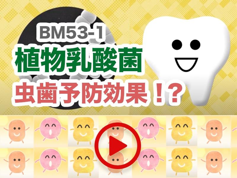 オーラルケアサポート型乳酸菌「BM53」
