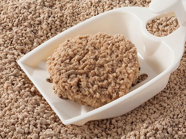 片付けが簡単な固まるネコ砂