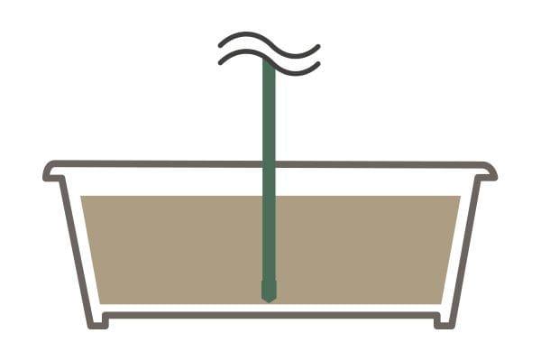 鉢植え・プランター